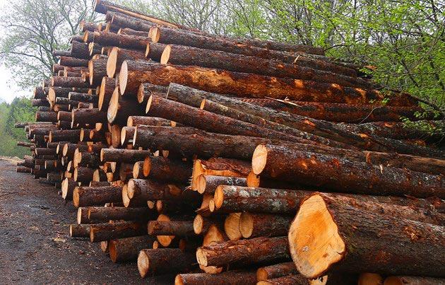 Forestry Innovation Hub